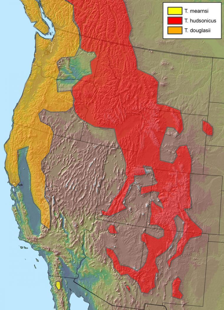 Geographic range of three red squirrel species